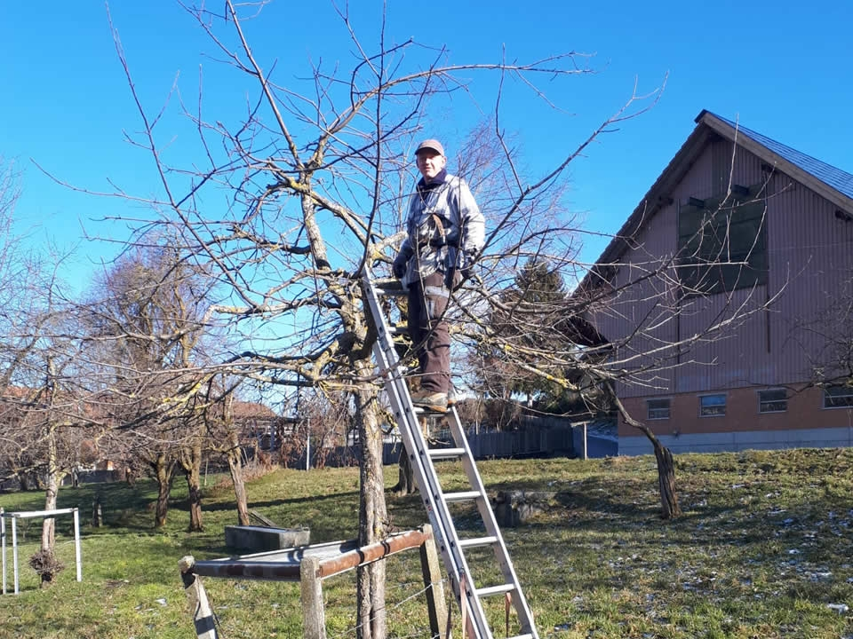 Winterschnitt bei unseren Obstbäumen